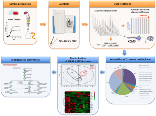 Development                