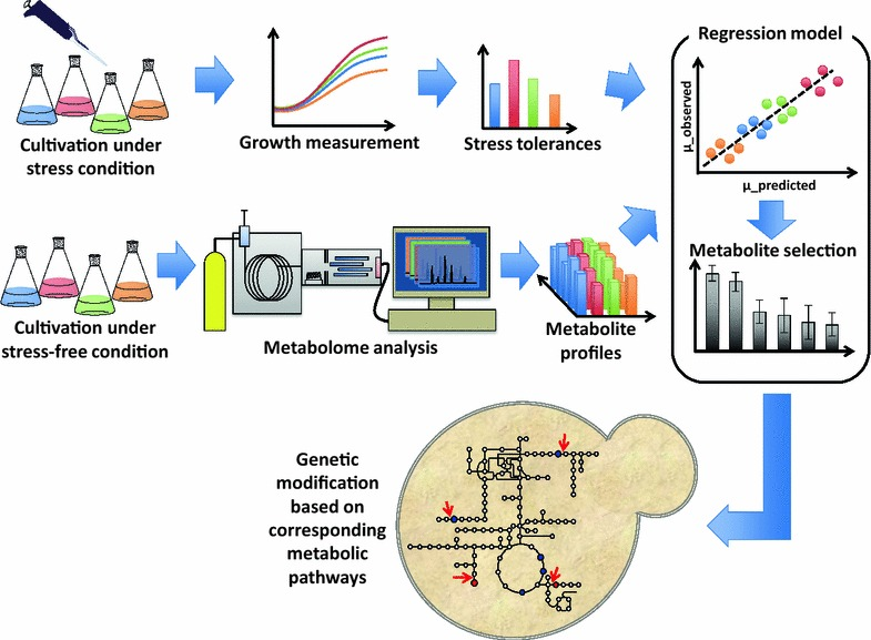 Overview of a metabolomics-based strategy