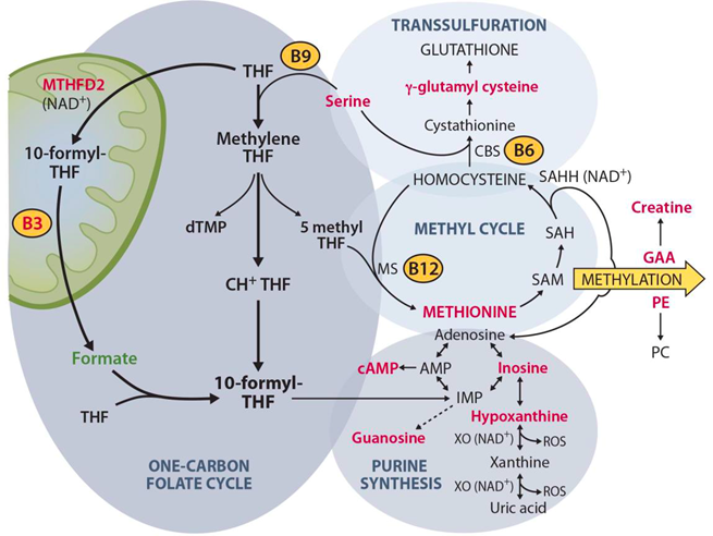Schematic picture of 1C