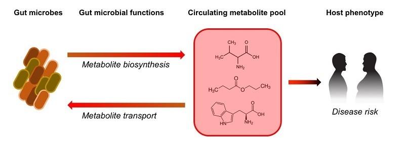 Metabolome as an           intermediate phenotype linking gut microbiota & disease           phenotypes